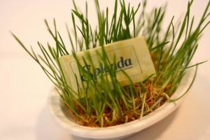 Splenda in the Grass